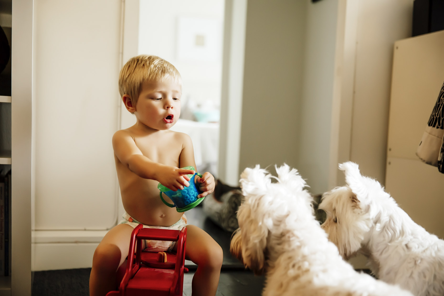 Baby-in-diaper-with-snacks-talking-to-westie-dogs-Inti-St-Clair-Lifestyle-is201506070234