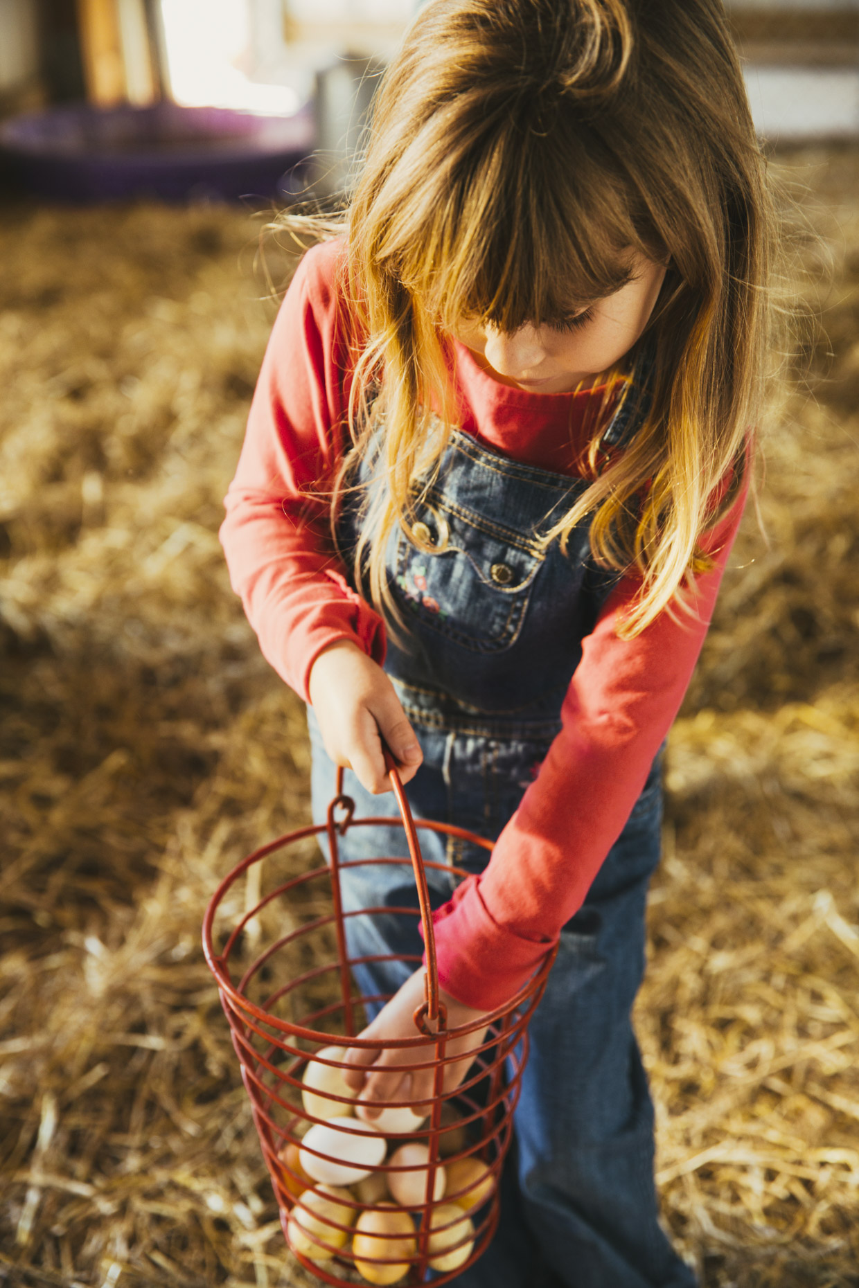 Girl collecting eggs in chicken coop