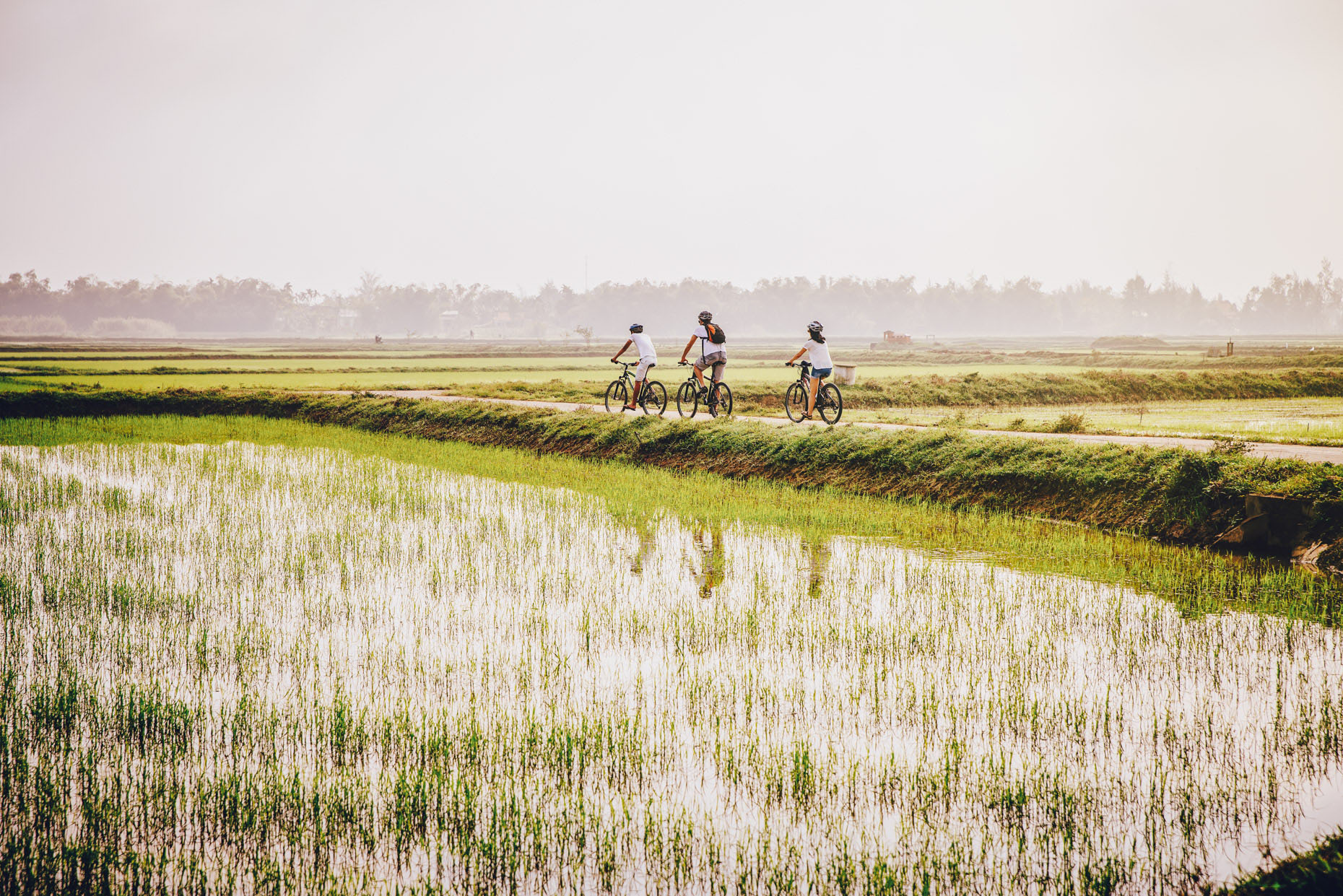 Three people cycling through rice fields in Vietnam