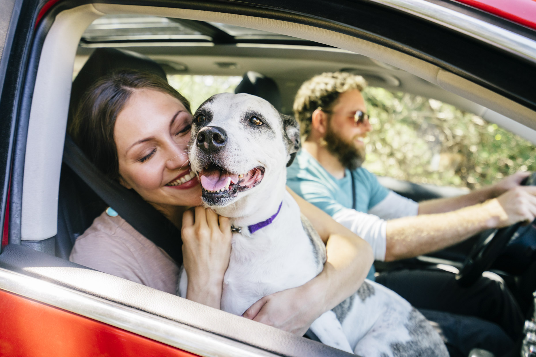 Woman riding in car with happy dog on lap